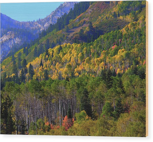 Autumn In Utah Wood Print