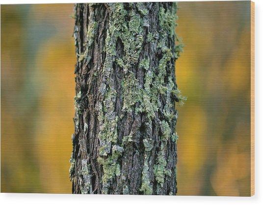 Autumn Ironbark Wood Print