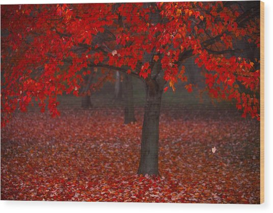 Wood Print featuring the photograph Autumn by Jane Melgaard
