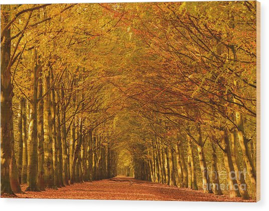 Autumn Lane In An Orange Forest Wood Print
