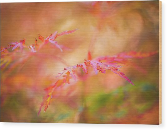 Autumn Leaf Abstract Wood Print