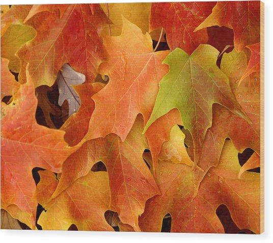 Autumn Leaves - Foliage Wood Print by Dmitriy Margolin