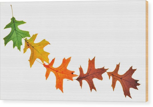Autumn Leaves 1 Wood Print