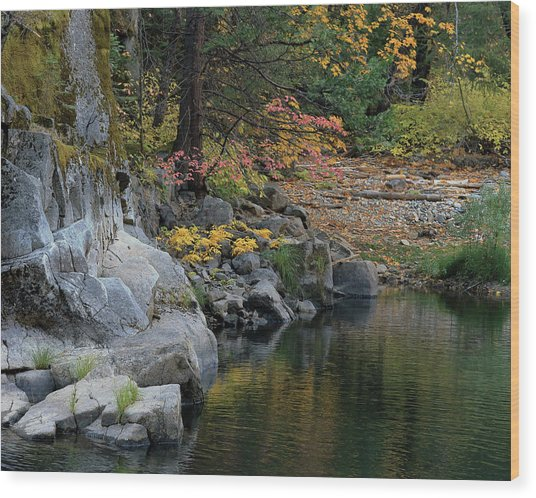 Autumn Leaves And Merced River, Mariposa County, California Wood Print by Troy Montemayor