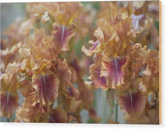 Autumn Leaves Irises In Garden Wood Print