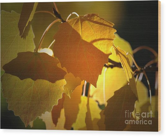 Autumn Leaves Wood Print by Sharon Talson