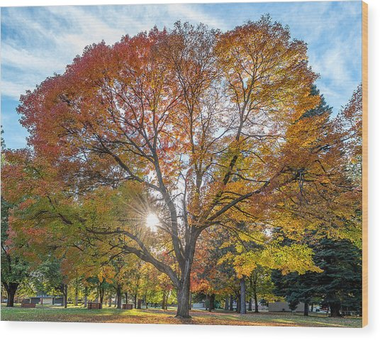 Autumn Maple Wood Print