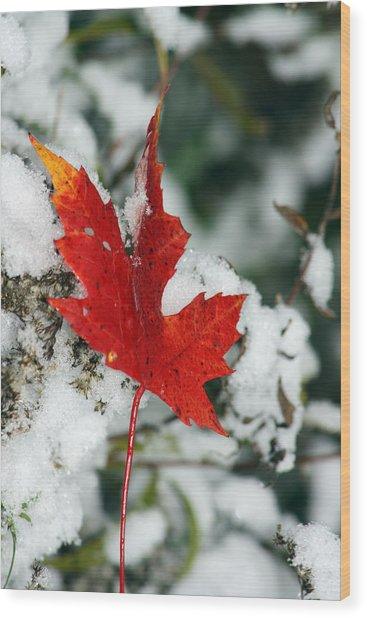 Autumn Meets Winter Wood Print