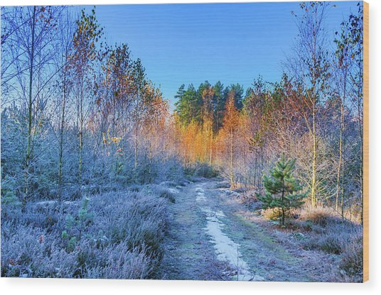 Autumn Meets Winter Wood Print