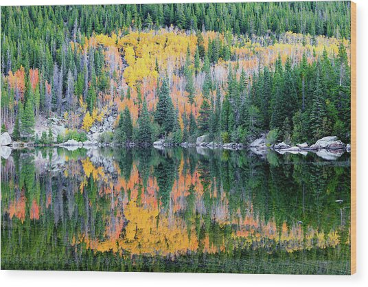 Autumn Mirror At Bear Lake Wood Print