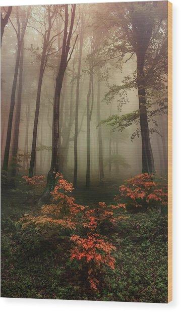 Autumn Mornin In Forgotten Forest Wood Print