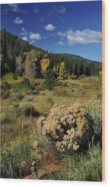 Autumn Morning In The Canyon Wood Print