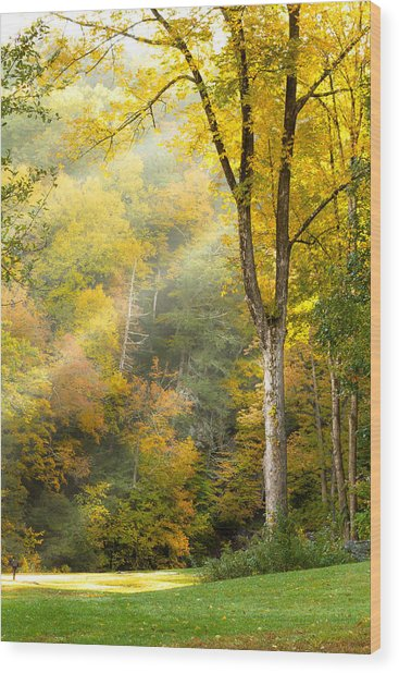 Autumn Morning Rays Wood Print