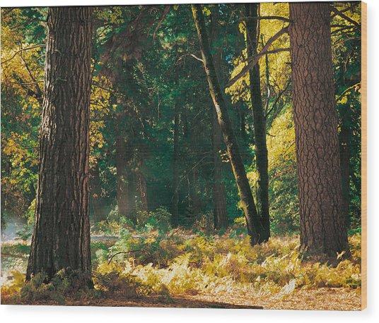 Autumn Morning Yosemite National Park Wood Print by Edward Mendes