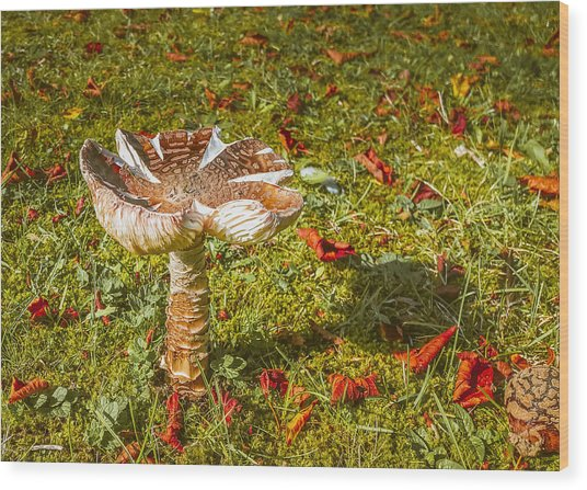 Autumn Mushroom Wood Print