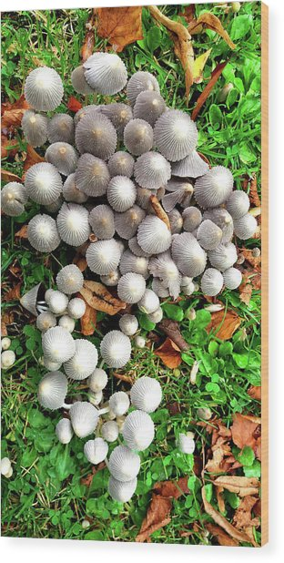 Autumn Mushrooms Wood Print
