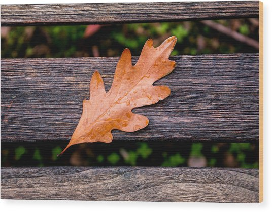Autumn Oakleaf On Bench Wood Print