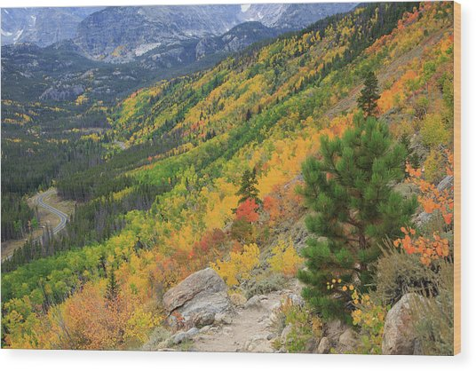 Autumn On Bierstadt Trail Wood Print