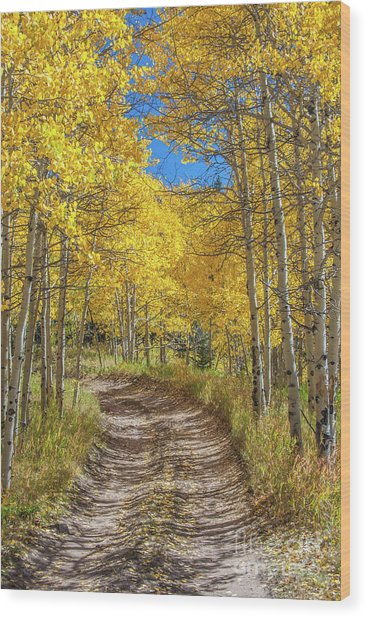 Autumn On Medano Pass Wood Print