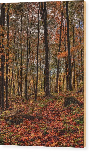 Autumn On The Ice Age Trail Wood Print