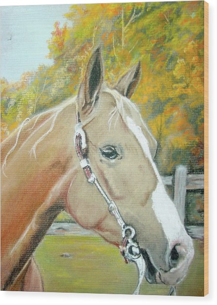 Autumn Palomino Wood Print by Crystal  Harris-Donnelly