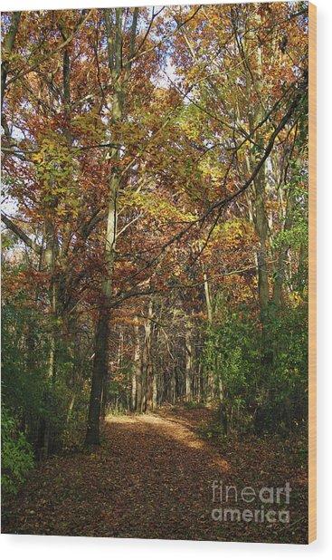 Autumn Path At St Croix Bluffs Wood Print