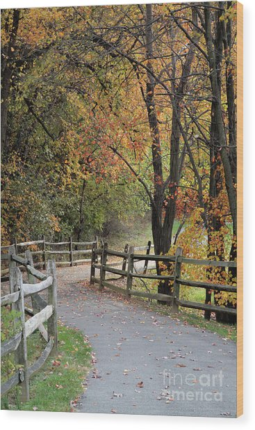 Autumn Path In Park In Maryland Wood Print