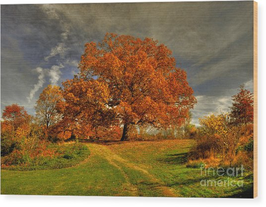 Wood Print featuring the photograph Autumn Picnic On The Hill by Lois Bryan