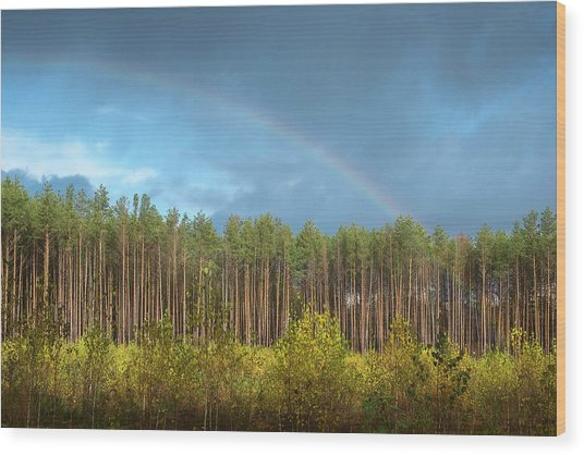 Wood Print featuring the photograph Autumn Rainbow. Sunychne, 2016. by Andriy Maykovskyi
