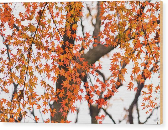 Autumn Red Leaves On A Tree   Wood Print