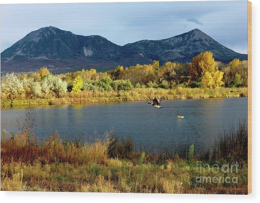 Autumn Rest Stop For Canadian Geese Wood Print