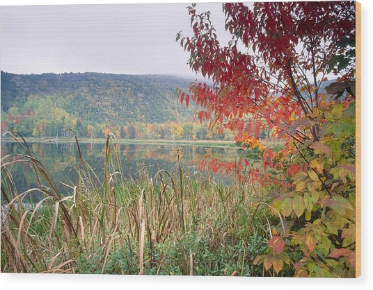 Autumn Scenic Acadia National Park Maine Wood Print by George Oze