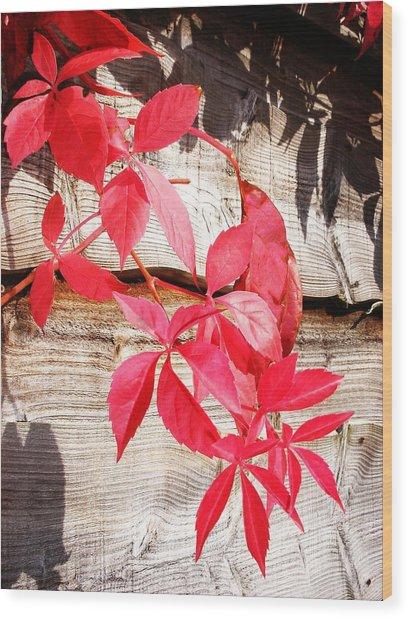 Autumn Shadows Wood Print by Lucia Del