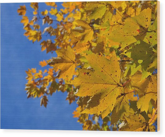 Autumn Sky Wood Print by JAMART Photography