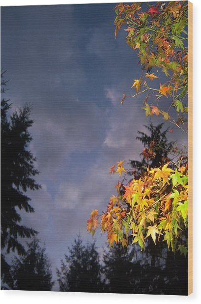 Autumn Sky Wood Print by Ken Day