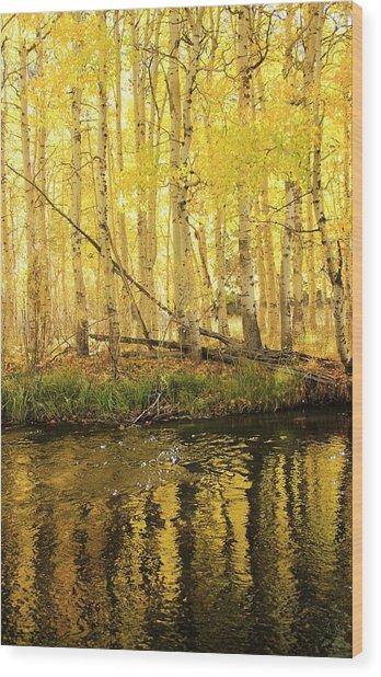 Autumn Soft Light In Stream Wood Print