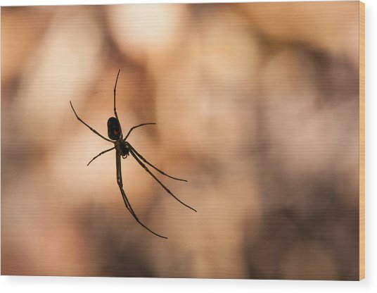 Autumn Spider Wood Print