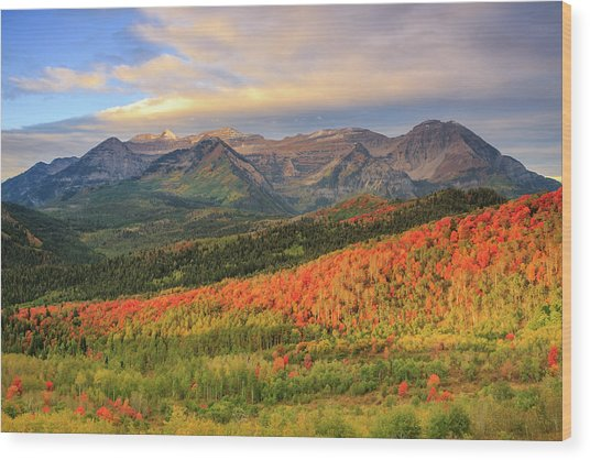 Autumn Splendor In The Wasatch Back. Wood Print
