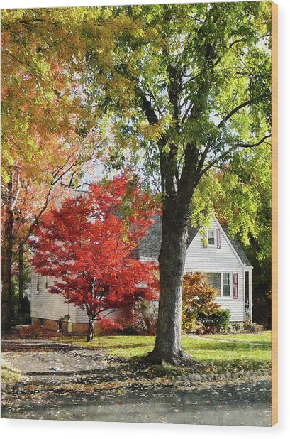 Autumn Street With Red Tree Wood Print by Susan Savad