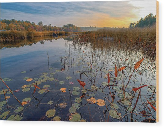 Autumn Sunrise At Compass Pond Wood Print
