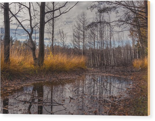 Autumn Swamp Wood Print