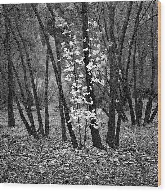 Autumn Tones Wood Print