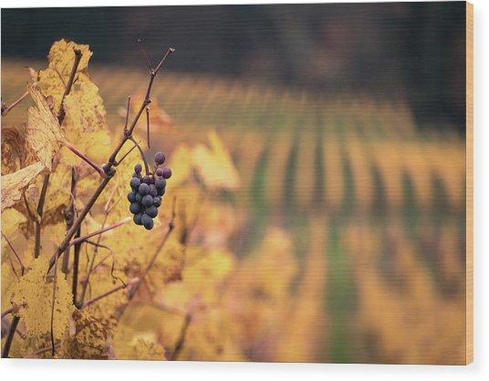 Autumn Vineyard Wood Print by Jason Clarke