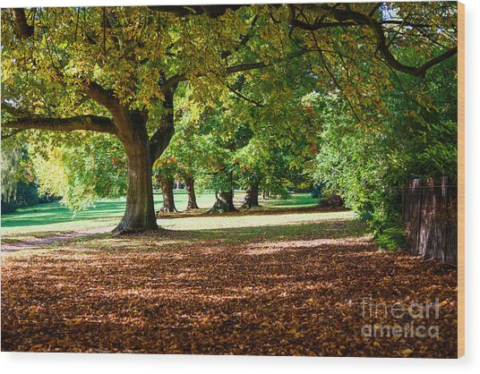 Autumn Walk In The Park Wood Print