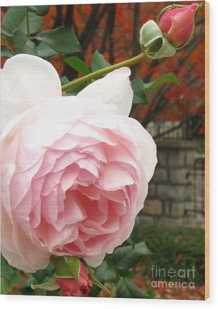 Autumn Walk Roses Wood Print