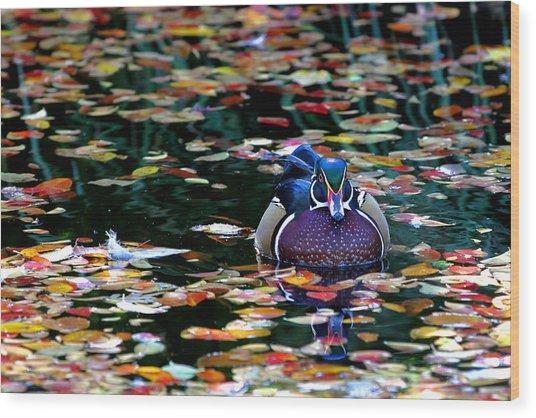 Autumn Wood Duck Wood Print