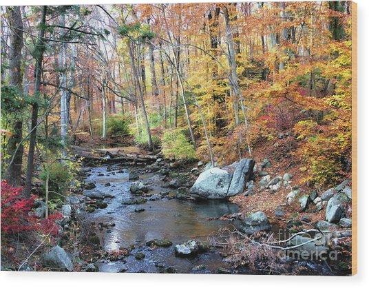 Autumn Woodlands Wood Print