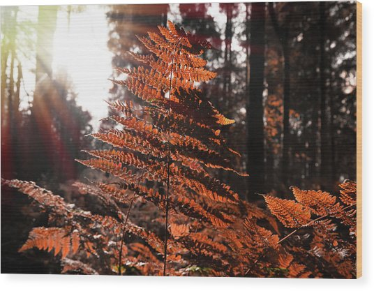 Autumnal Evening Wood Print