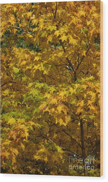 Autumnal Leaves And Trees 2 Wood Print