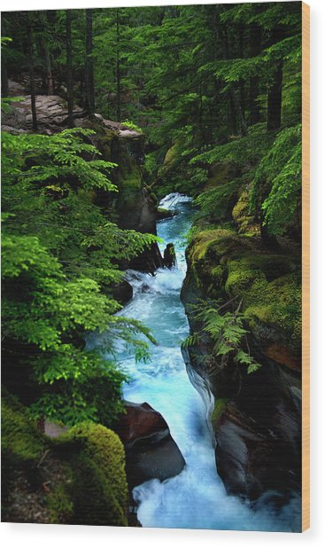 Avalanche Creek Waterfalls Wood Print